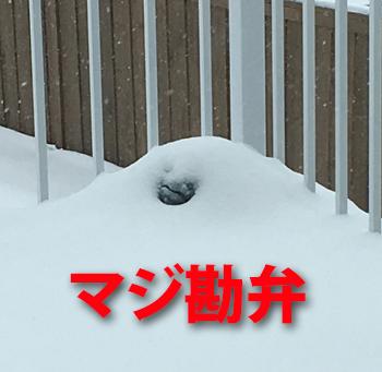 snow04031806.jpg