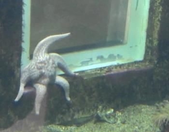 tiredstarfish.jpg