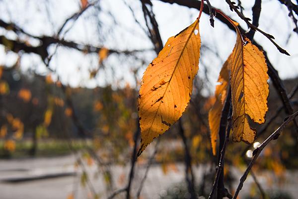 枯れ葉と逆光