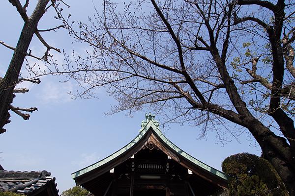 上小田井稲荷社拝殿屋根と桜
