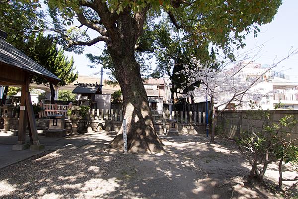 豊2伝馬神明社保存樹木