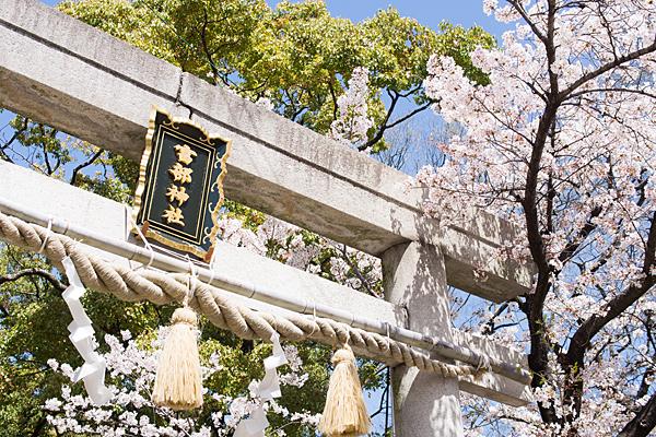 富部神社鳥居と桜