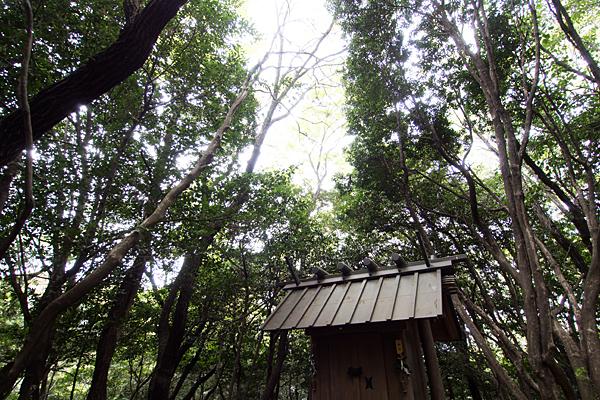 氷上姉子神社神明社の社と森