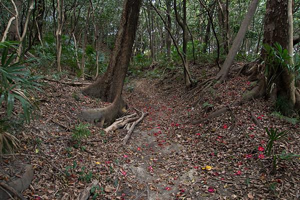 朝苧社への山道