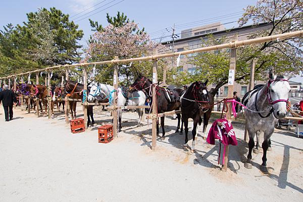 桃花祭馬たち