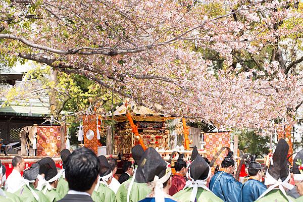桃花祭散り行く桜
