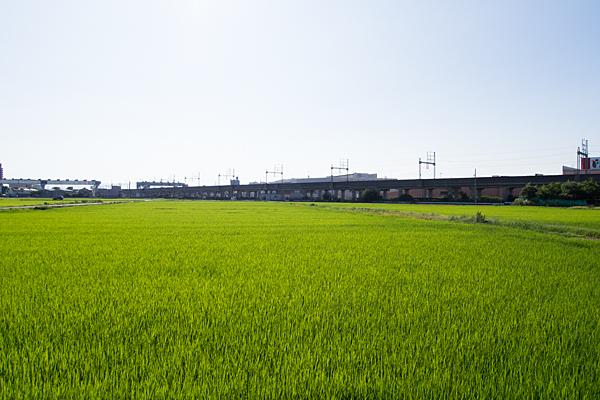 田んぼと鉄道高架