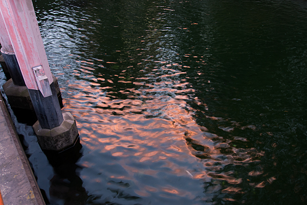 龍神池の夕照