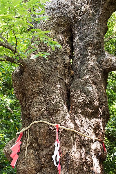 城山八幡宮連理木