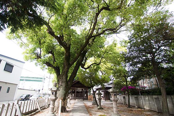 堀越神明社参道の風景