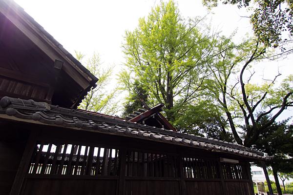 堀越神明社本殿屋根