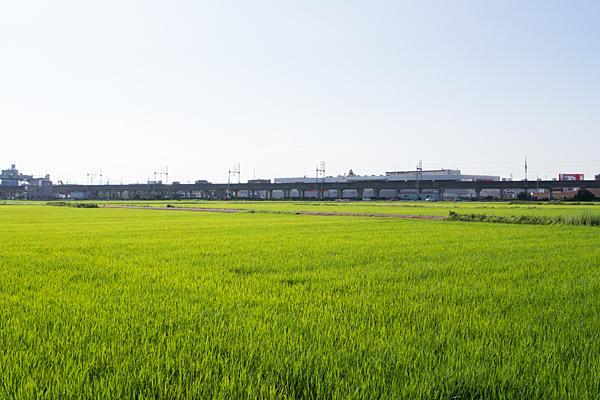 田んぼの初夏
