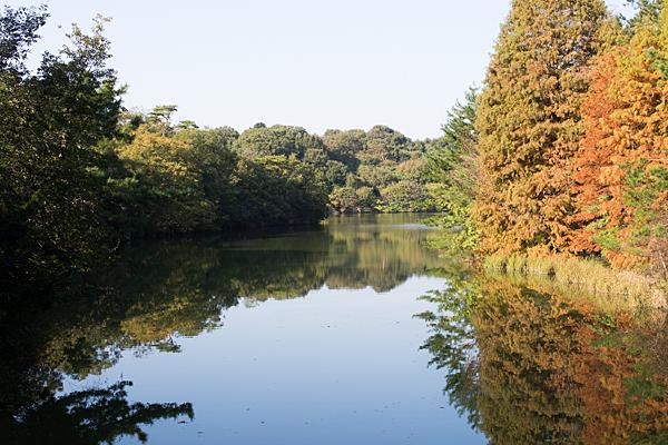森林公園の初秋