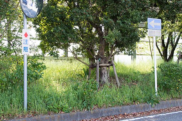 側道の草木
