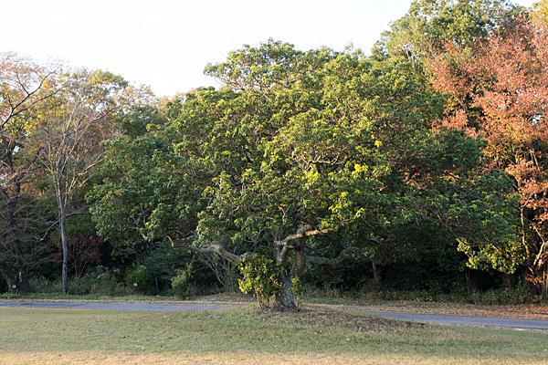 森林公園の木