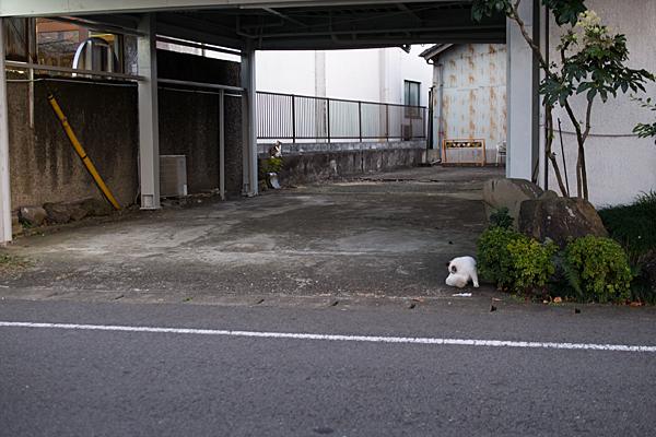 犬山の猫たち