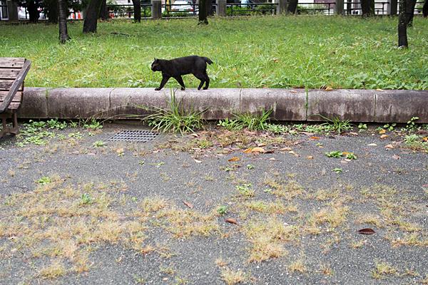 市政資料館の黒猫