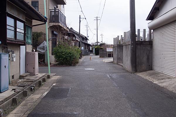 神社前の猫