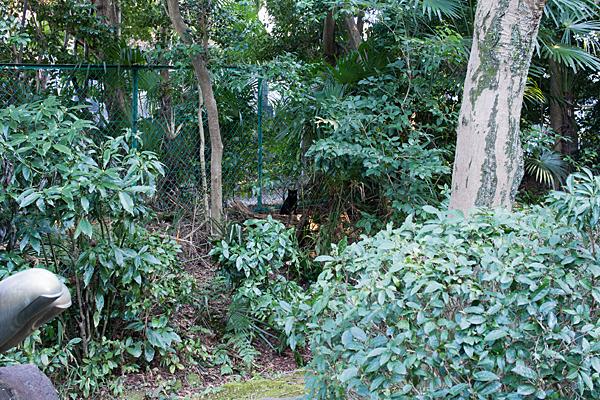 茂みの中の黒猫