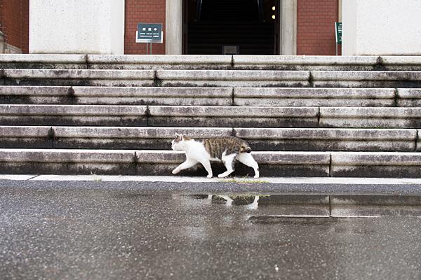 市政資料館前の猫