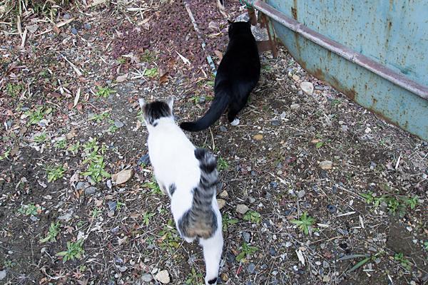 立ち去る猫たち