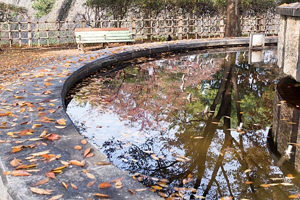 落ち葉と噴水