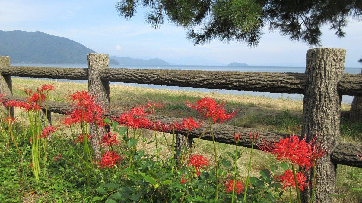 1709-33-琵琶湖⑦-IMG_1366
