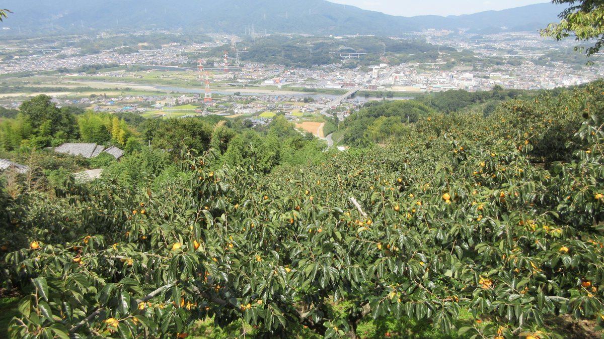 1709-35-橋本-IMG_1562