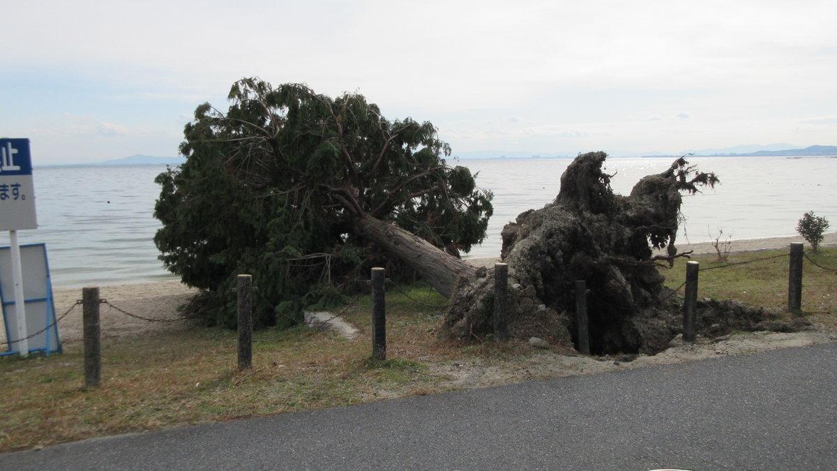 1712-24-琵琶湖⑨補-IMG_2284