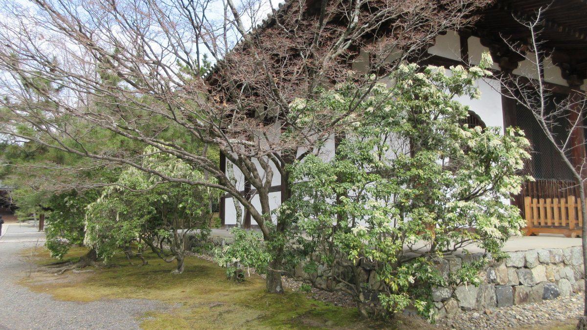 1803-25-京都2日目-IMG_3255