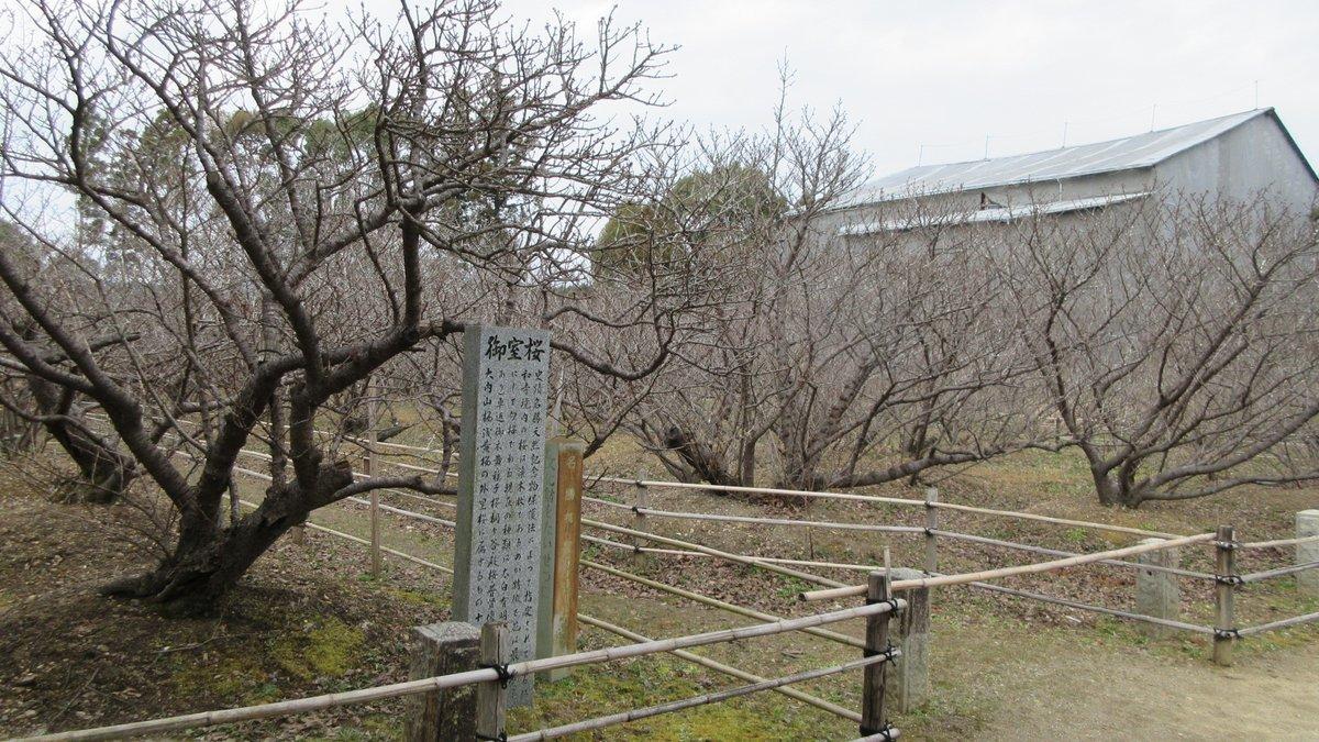 1803-17-京都2日目-IMG_3235