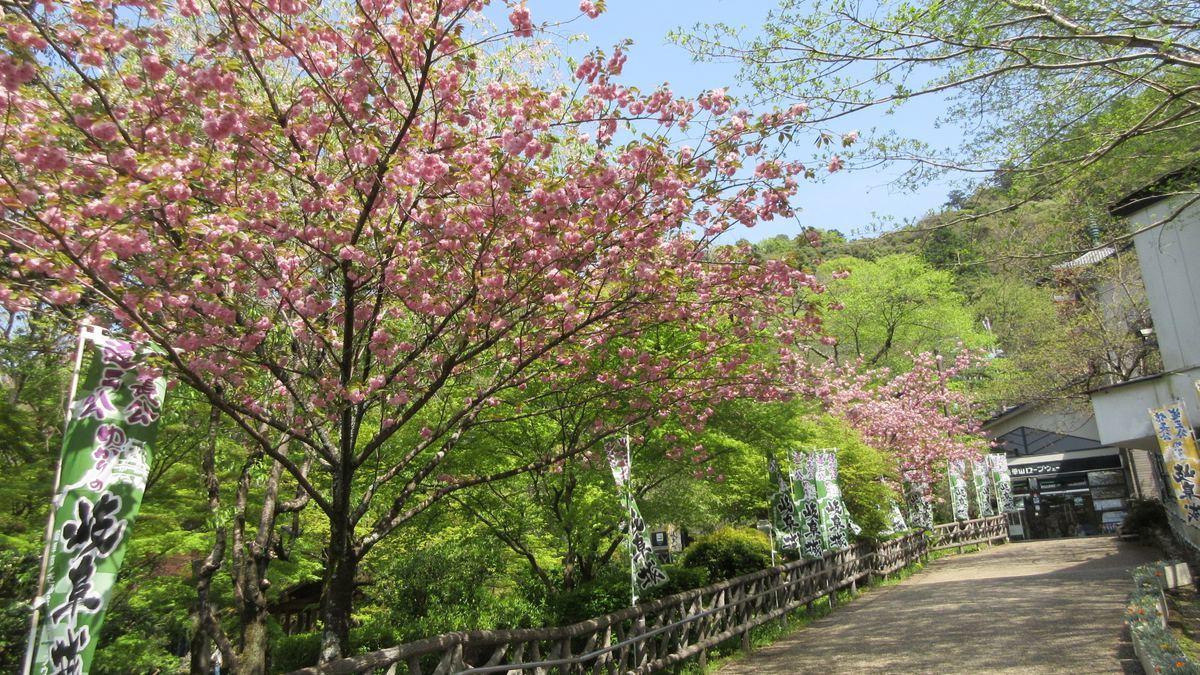 1804-06-金華山-IMG_3904