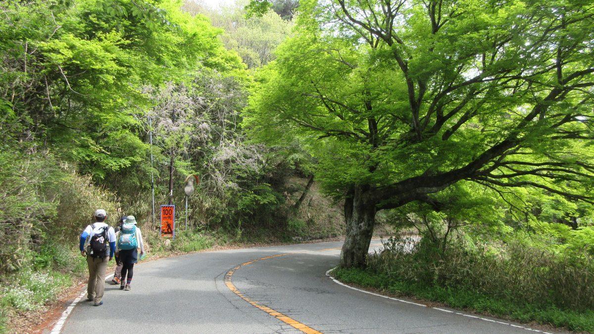 1805-09-六甲山-IMG_4531