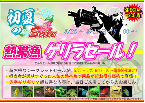 201712saimatsu_banner680_201805252101228e9.jpg