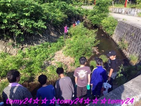 20180605田沢川清掃 (1)