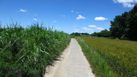 榎本牧場をスルーして北上します。この辺から急に牧歌的ですよね。