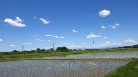 田んぼも稲が植えられて、これから夏ですね~