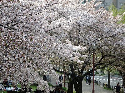 金山~WINS名古屋付近の桜