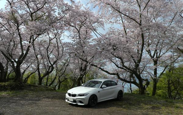 桜とM2002