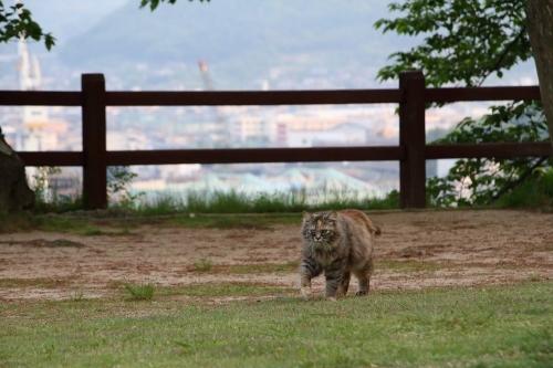 尾道猫 1