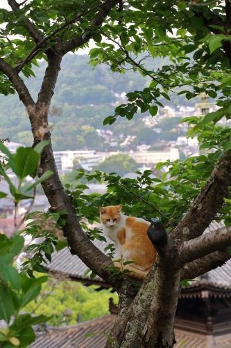 尾道猫 2