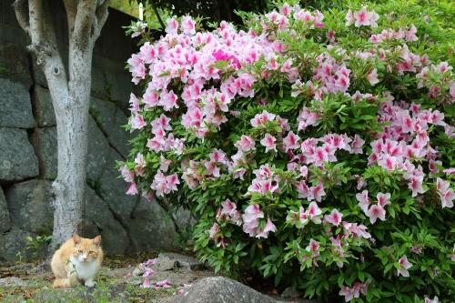尾道猫 3