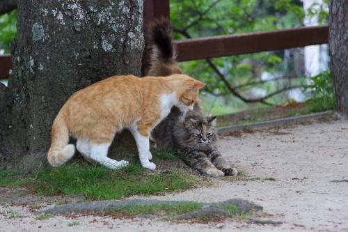 尾道猫 4