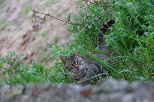 尾道猫 6