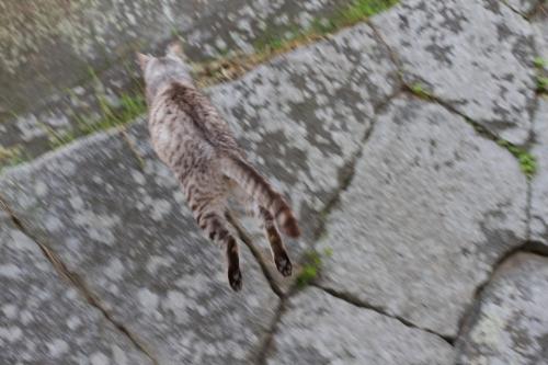尾道猫 7