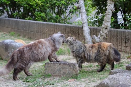 尾道猫 8