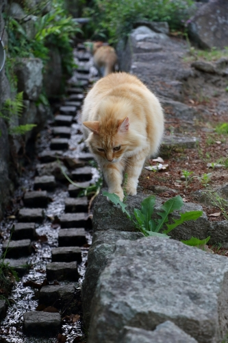 尾道猫 9