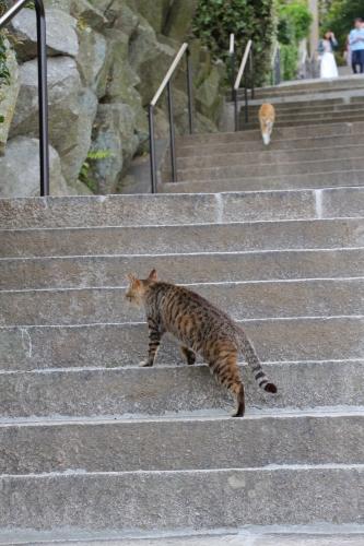 尾道猫 10