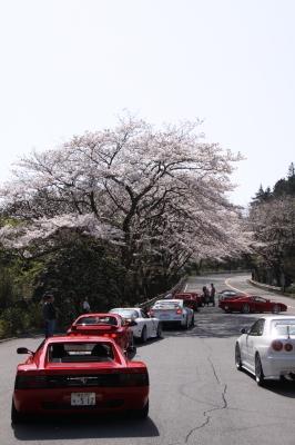 伊豆高原 桜編