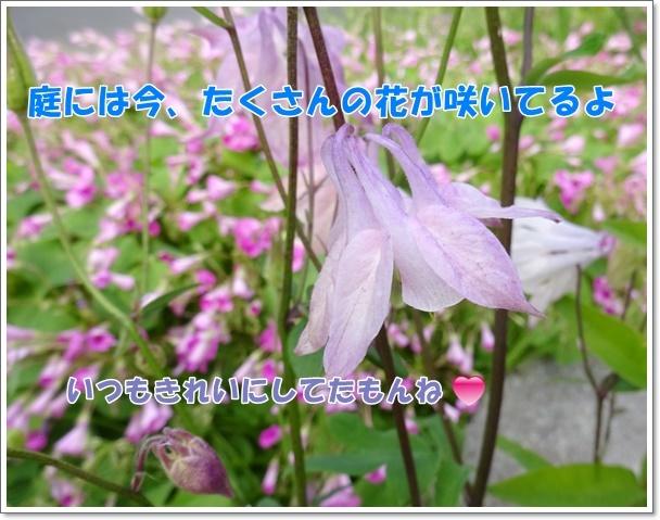 DSC08437-2.jpg